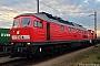 "LTS 0393 - DB Schenker ""233 176-7"" 28.08.2015 - Regensburg-Ost, GüterbahnhofPaul Tabbert"